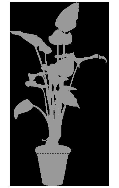 鉢植レンタル特大