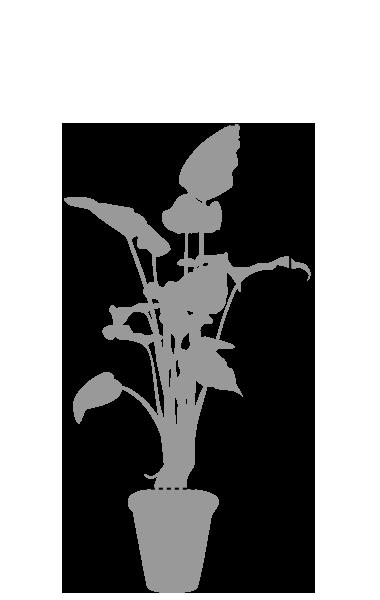 鉢植レンタル大