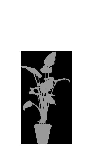 鉢植レンタル中