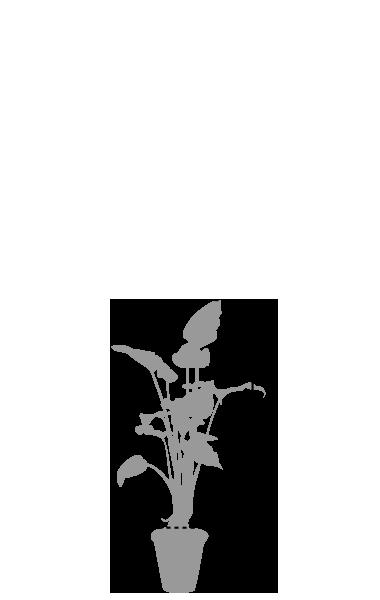 鉢植レンタル小